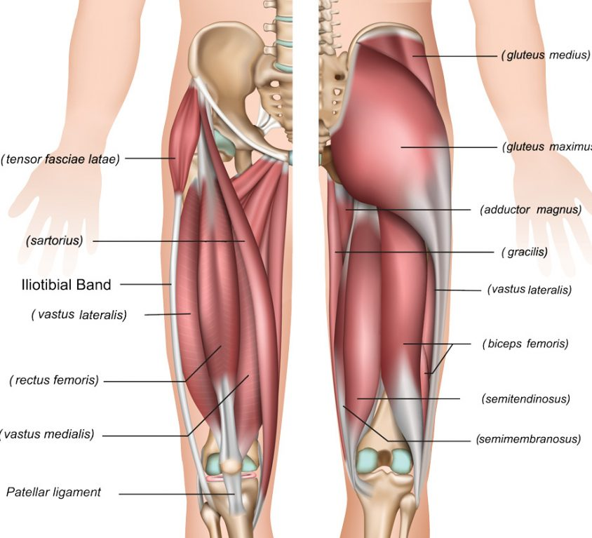 thigh-1