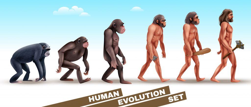 Gait evolution human